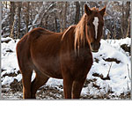 Canon PowerShot G9 - Cold Horse
