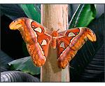 Sony Cybershot DSC-W150 - Butterfly or Moth?