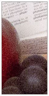 Sony Alpha SLT-A55 - 100 percent sample at 100%