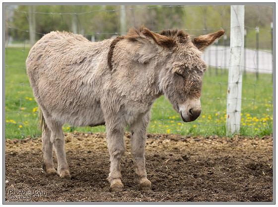 Sony Alpha SLT-A55 - Fuzzy Donkey