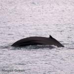 Olympus E-P3 - breaching whale photo