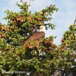 Olympus E-P3 - bald eagle photo