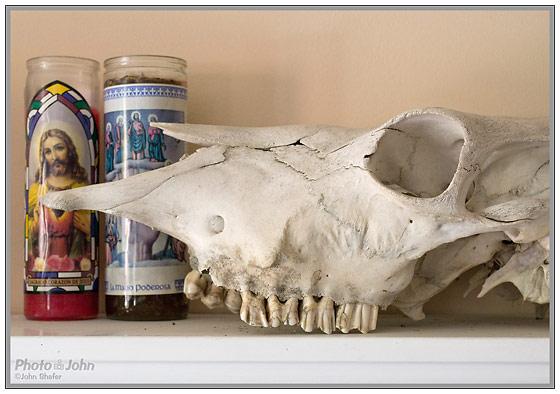 Nikon D3100 - Cow Skull & Candles