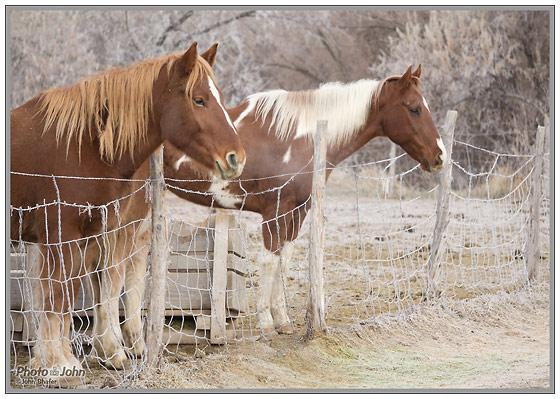 Winter Morning Horses