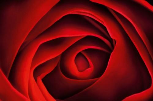 Kiss from a Rose - © Harold Davis