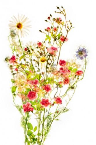 Faerie Bouquet - © Harold Davis