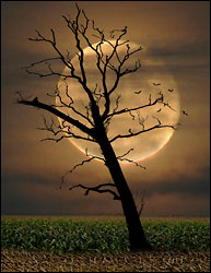 Harvest Moon  - by Camera Guy
