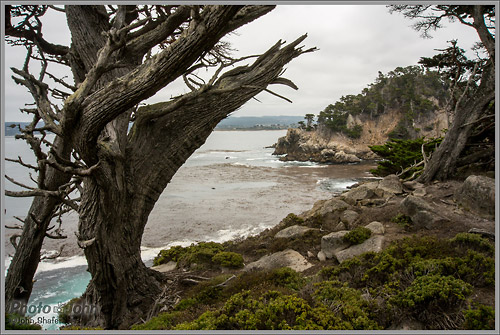 Sony Alpha NEX-6 - Point Lobos Landscape Photo
