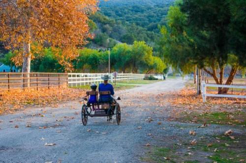 Evening ride by Adamo