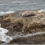 Sea Lion Cove - Point Lobos - Big Sur