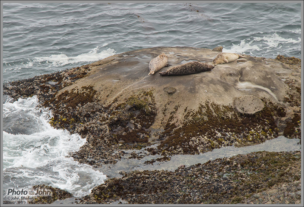 Sea Lion Cove - Point Lobos - Big Sur