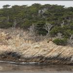 Cliffs & Cypress Trees - Point Lobos - Big Sur