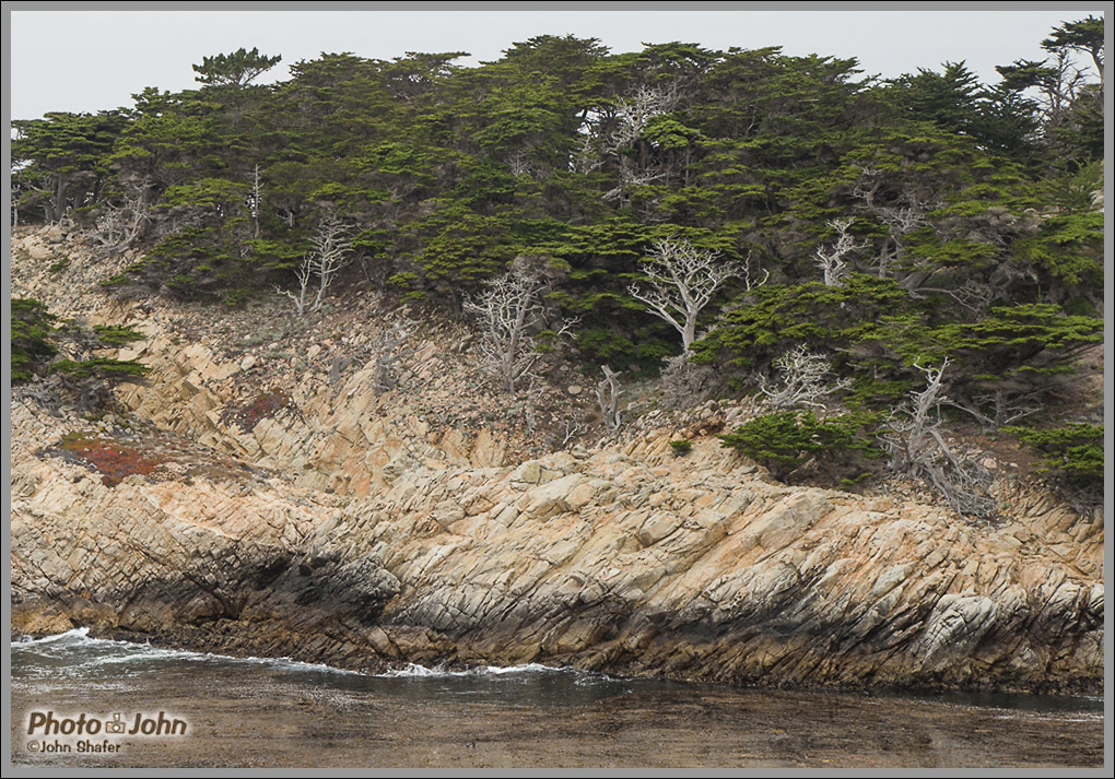 Cliffs & Cypress Trees - Point Lobos - Big Sur