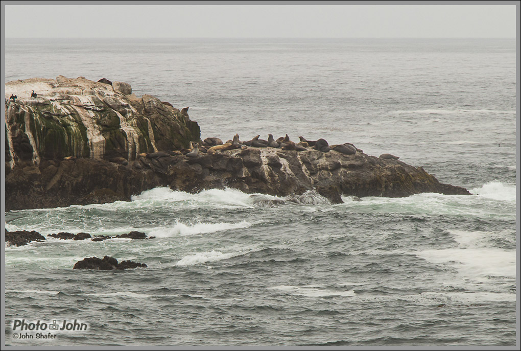 Sea Lions - Point Lobos - Big Sur, California