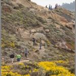 Trail & Wildflowers - Point Lobos - Big Sur