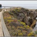 The Hanging Garden - Point Lobos - Big Sur