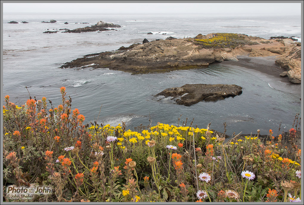 Wildflowers at Point Lobos - Big Sur