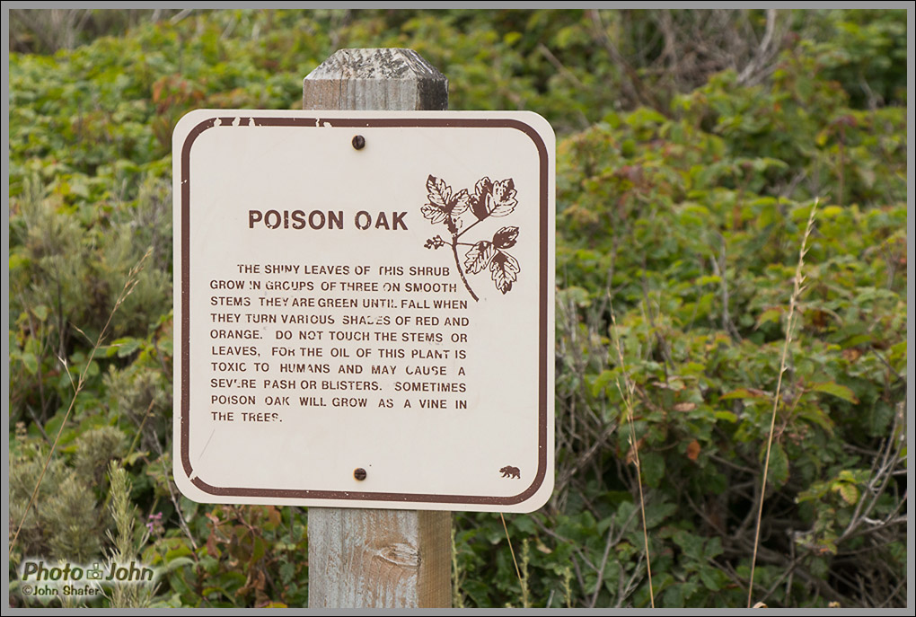 Poison Oak - Big Sur, California