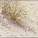 Purple Sand - Pfeiffer Beach - Big Sur, California
