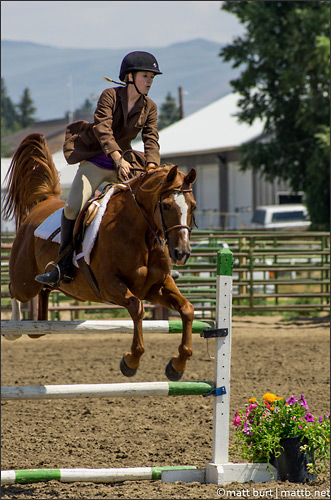 """""""Some Equestrian Jumping"""" by mattb"""