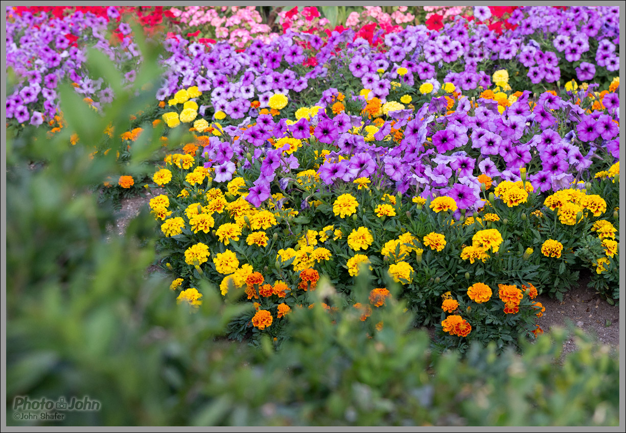 Sigma 18-35mm f/1.8 - Flowerbed Sample Photo