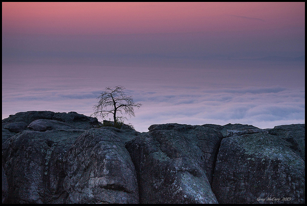 """Little Tree Above the Clouds"" by Greg McCary"