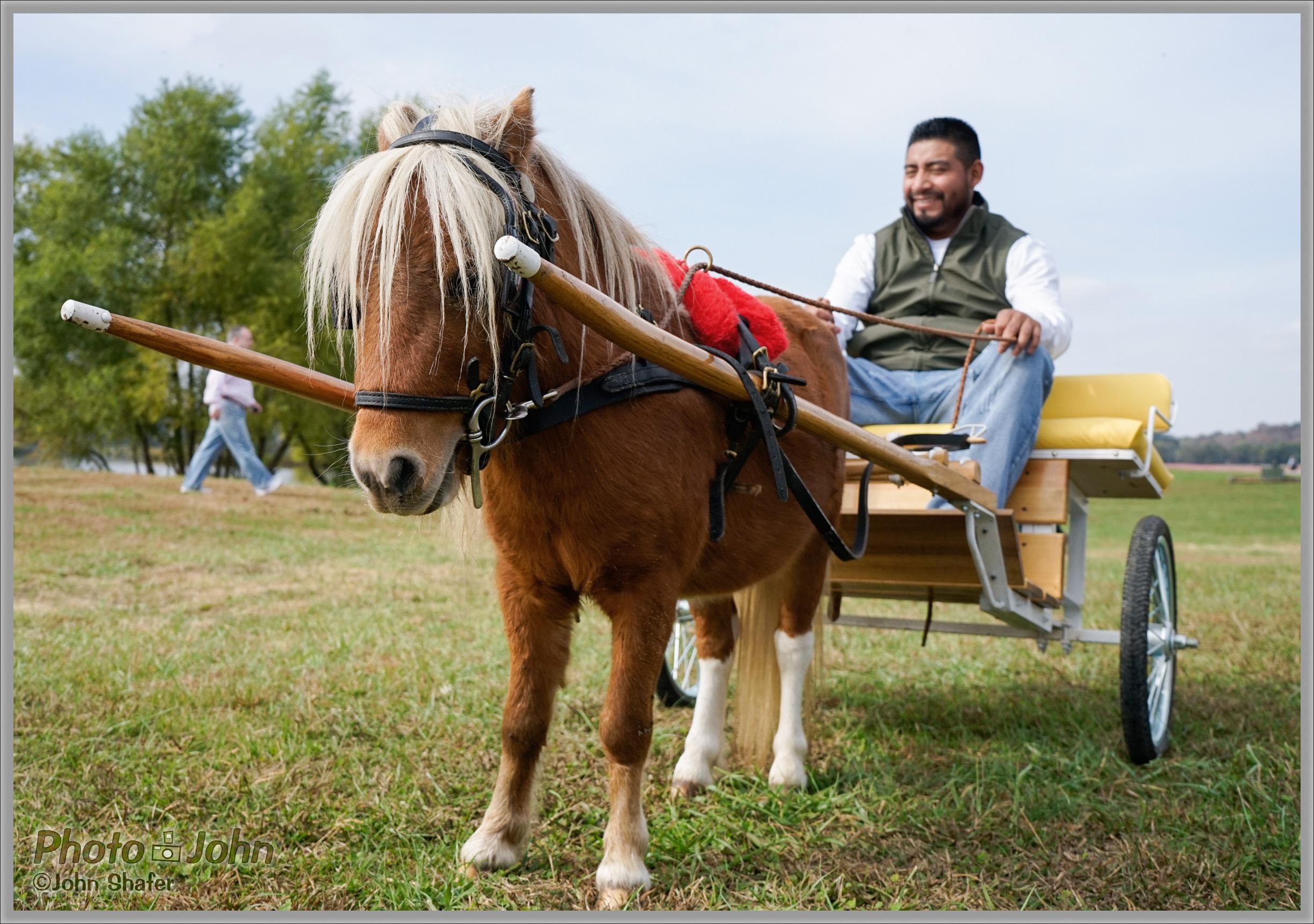 Sony Alpha A7 - Miniature Shetland Pony