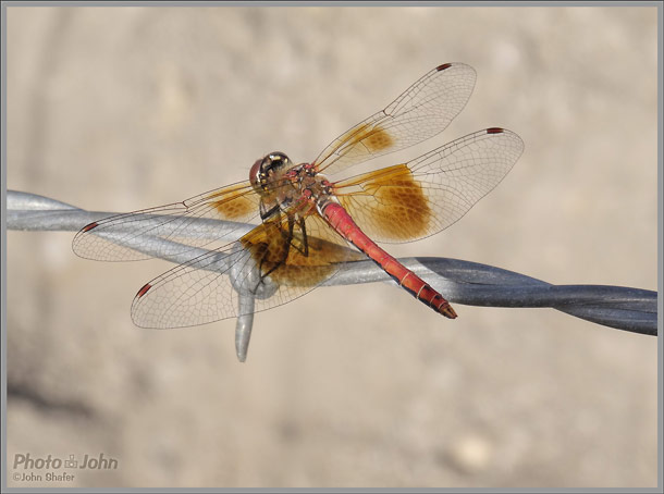 Sony Cybershot HX50V - Dragonfly Photo