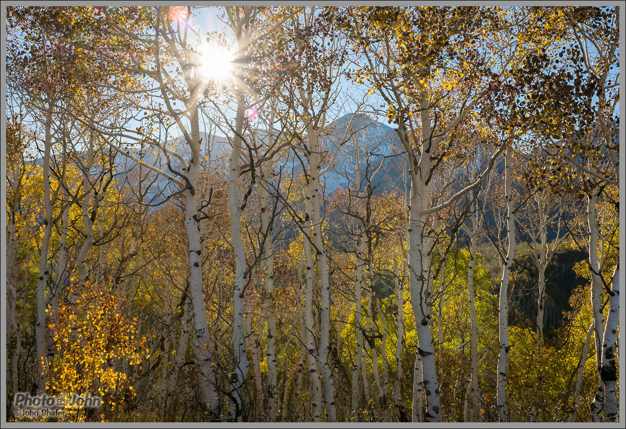 Fujifilm X100S - Backlit Fall Aspen Trees