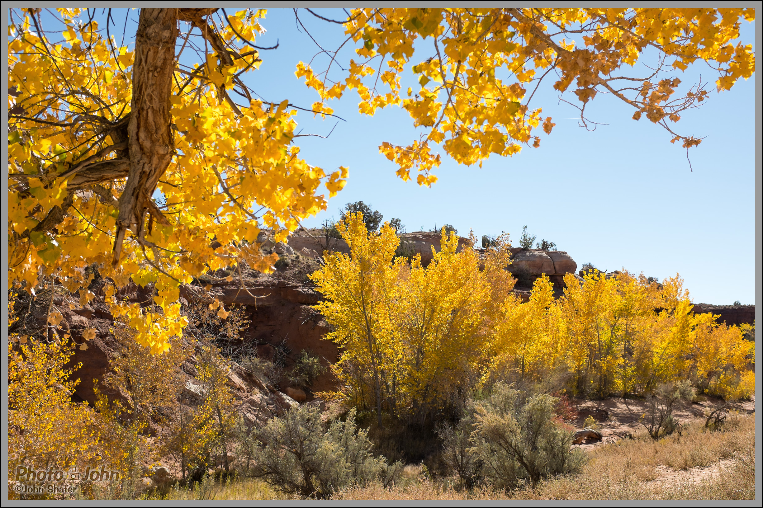 Fujifilm X100S - Desert Gold - Fall Cottonwood Trees
