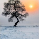 """Solitude tree & setting sun"" by Richard Hla"