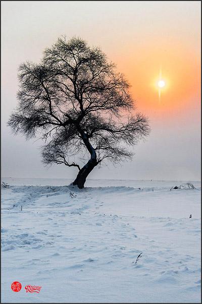 """Solitude tree & setting sun"" by Richard Hla"