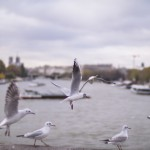 Gulls - Handevision Ibelux 40mm f/0.85 Lens Sample Photo