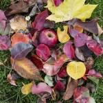 Leaves & Apple - Handevision Ibelux 40mm f/0.85 Lens Sample Photo